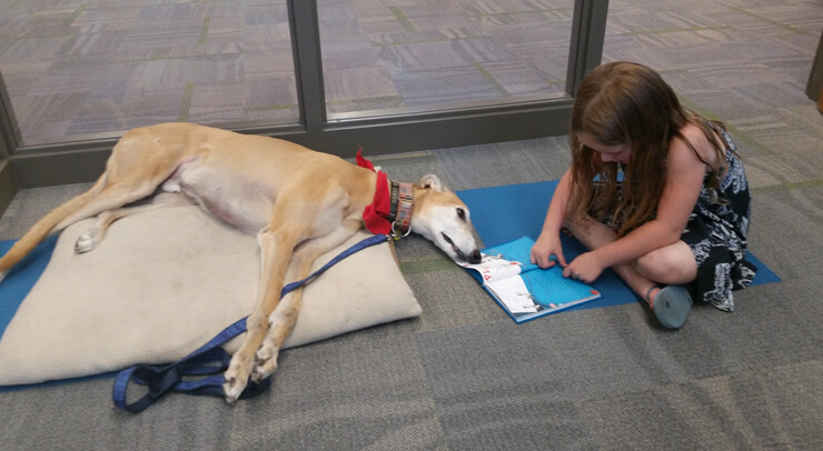 the lonely library dog