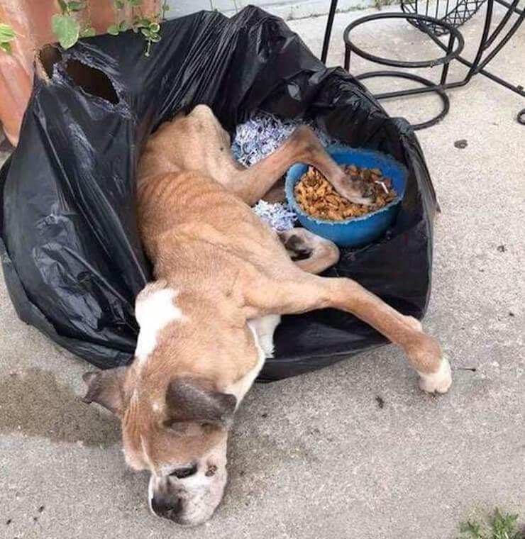 the trash bag boxers