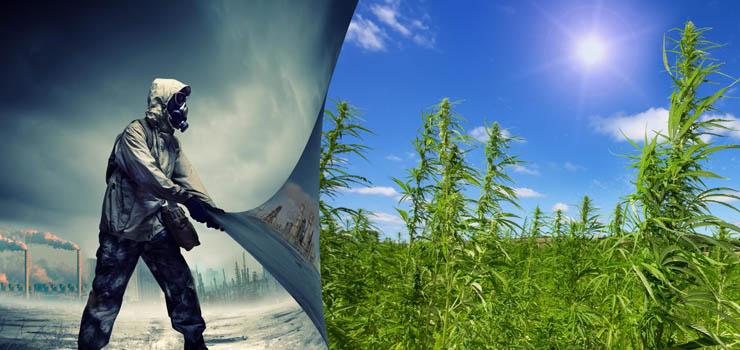 hemp plant fuel