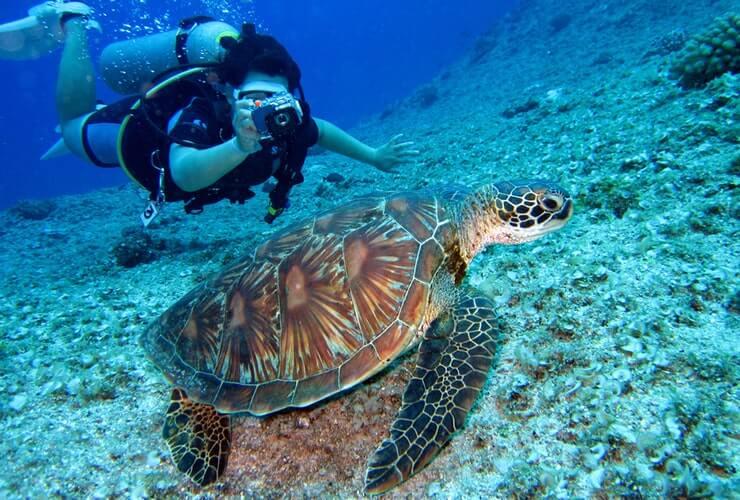divemaster life underwater