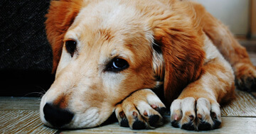 10 Of The Most Uplifting Dog Stories The Internet Has To Offer></a><a href=