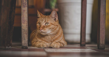 5 Reasons Owning a Cat Could Be Good for Your Health></a><a href=