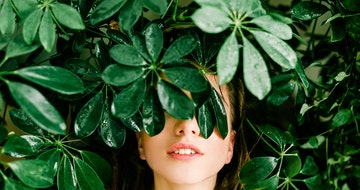 Best Air Purifying Plants For Your Home ? (Most Common Houseplants)></a><a href=